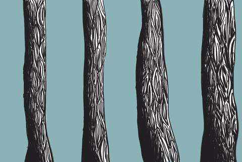 Perspektiv – Træer