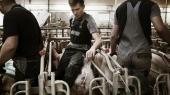 Dan Jørgensens forbud mod dyresex er patetisk. Ikke fordi dyresex ikke er ulækkert, men fordi hans argumentation klinger hult i forhold til den måde, vi har valgt at producere dyr på her i landet