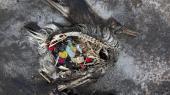En albatrosunge ligger død med maven fuld af plastik.Dette er ikke det omtalte foto af fotografen Chris Jordan, men der er desværre rigeligt at vælge mellem.