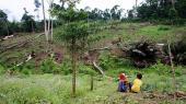 I Indonesien vil et dansk pilotprojekt skabe et kommercielt alternativ til den illegale, men økonomisk attraktive skovhugst. Siden støtten begyndte i 2011, er en femtedel af skoven forsvundet og blevet omdannet til hovedsageligt palmeindustri. Næste år udløber støtten – alligevel er folkene bag optimistiske