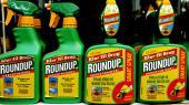 En stribe undersøgelser har tidligere påvist rester af glyfosat –aktivstoffet i Roundup, der verdens mest solgte ukrudtsmiddel –i forskellige befolkningsgruppers urin, ligesom stoffet er fundet i små koncentrationer i en lang række levnedsmidler.