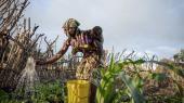 Hvis de afrikanske lande syd for Sahara skal kunne brødføde deres voksende befolkninger i fremtiden, vil det kræve store investeringer i landbrugsproduktionen
