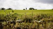 Der er brug for et paradigmeskifte i landbruget, mener kronikøren, der, udover at ville have pesticidforbruget sat væsentligt ned, også mener, at samspillet mellem stofferne skal i centrum, sådet ikke længere er nok, at de godkendes hver for sig.
