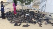 Efterladte sandaler fra de hundredvis af ofre, der i fredags blev dræbt i Ar-Rawda-moskeen i den egyptiske by Bir al-Abed. Terrorangrebet er det mest dødelige i Egyptens nyere historie.