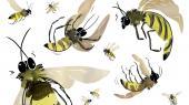 Med hjerner som knappenålshoveder har de små bestøvere været her på planeten meget længere end os og formået at skabe superintelligente samfund baseret på samarbejde, social bevidsthed og altruisme. Det er blevet forudsætningen for en stor del af dagens globale fødevareproduktion. Nu er vi systematisk ved at undergrave biernes overlevelsesmuligheder