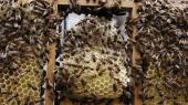 Europas bestande af honningbier og vilde bier er truede, og når antallet af bier og andre bestøvere svinder, kan det få store konsekvenser for fødevareforsyningen. Det er derfor, EU-Kommissionen og EU's eksperter forsøger at gøre mere for at beskytte bierne mod især brugen af sprøjtemidler, som er en af de formodet store årsager til bidød. Dog vil det ifølge producenterne i den agrokemiske industri blive meget svært at finde sprøjtemidler, der i tilstrækkelig grad kan beskytte bierne på det niveau, de nye retningslinjer kræver.