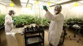 Gives der grønt lys for fusion af Bayer og Monsanto, vil det forstærke udviklingen mod et kemisk baseret industrilandbrug og indebære risiko for prisstigninger på grund af svækket konkurrence, frygter kritikere. Her et Monsanto-laboratorium i Canada.