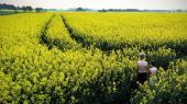 Når landmænd har fået lov til at bejdse danske vinterrapsmarker med neonikotinoider på trods af et EU-forbud, er det ifølge Miljøstyrelsen helt inden for rammerne af lovgivningen.