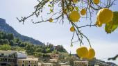 Ifølge Mathias Sonne blomstre vreden pt. om kap med citronerne, hvilket kan resulterei at Italien forlader samarbejdet om euroen.