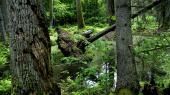 EU-systemet er en effektiv håndhæver, fordi samarbejdet også binder landene juridisk. Det var eksempelvis EU-Domstolen, som i april stoppede Polens omfattende fældning af træer i en af Europas sidste urskove, Bialowieza-skoven.