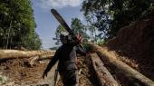 Skov bliver ulovligt ryddet for at dyrke palmeolie i reservatet Buan i den malaysiske del af Borneo.