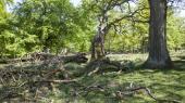 Dansk Naturfredningsforening har skønnet, at det vil koste omkring to milliarder kroner at etablere 15 naturparker med i alt 75.000 hektar urørt skov.