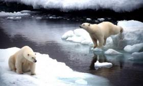 Et stort økologisk eksperiment med mange ubekendte er i gang i Arktis, hvor ophobningen af svært nedbrydelige miljøgifte i fødekæderne kan blive forstærket af de klimaændringer, der ændrer vind, vejr og temperaturforhold. Forskere forsamlet i København advarer om uforudsigelige konsekvenser