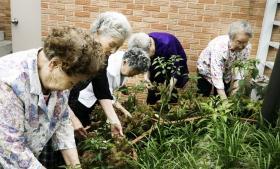 Når Seouls borgmester Park Won-soon skal have en pause, roder han med urterne i sin køkkenhavereol i kontoret på Seoul Rådhus. Ifølge Song Im-bong fra bystyrets afdeling for urbant landbrug er det ikke mindst megabyens ældre beboere, som er ivrige efter at få anlagt køkkenhaver i deres boligområder.