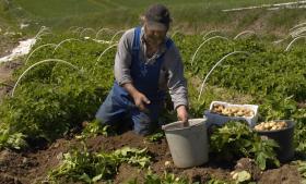 Kulstoffet indgår i en række processer i landbruget og samfundet i øvrigt samt i naturen og er dermed afgørende for udvikling af bæredygtighed. Derfor har Samsø udviklet en kulstofmodel og en bæredygtighedsanalyse