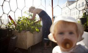 Kun 11 pct. af danskerne har engageret sig i omstillingsprojekter som f.eks. byhaven Prags Have på Amager.