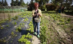 Koula Manabi høster frisk salat og samler æg i minilandbruget i Agios Anastasios, som har fået vejledning af American Farm School. Her ses Evangelos Vergos i stedets økologiske butik, hvor man kan købe friskmalket mælk, og ude i olivenlunden.
