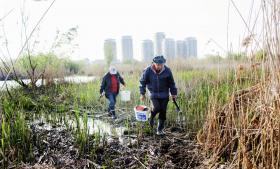 Ceaucescus megalomane planer om et svømmebassin/kunstig sø med en omkreds på fire km i udkanten af Bukarest, er i dag muteret og omdannet til et sumplignende vådområde, der er omgivet af en enorm cementvold. Det er blevet en tilgroet grøn oase, der forsvares af miljøforkæmpere.