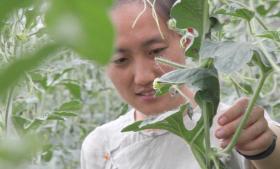'Hvorfor skal alle ind til byerne og arbejde på kontor? Hvorfor ikke leve af at dyrke jorden? Hvorfor ikke tillade det simple liv?' spørger Shi Yan, der selv har fravalgt karrieren i Beijing til fordel for livet i et landbrugskollektiv.