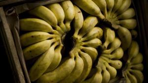 Den Europæiske Investeringsbank har investeret i en bananplantage i Cameroun med dårlige arbjedsvilkår, og det får nu flere EU-parlamentarikere til at råbe vagt i gevær.