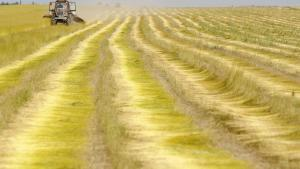 I Rusland er høsten fejlet på et areal på størrelse med tre gange Danmark. Da landet er verdens fjerdestørste kornproducent, kan det få alvorlige konsekvenser for prisen på verdensmarkedet, og i værste fald kan det udvikle sig til en fødevarekrise.