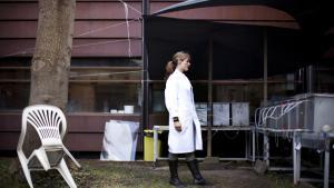 Jane Ebsen Morthorsts forskning i hormonfortyrrende stoffer har været med til at udvikle en testguideline for alle medlemslande i OECD.Helt konkret har forskningen betydet, at alle OECD-lande idag  tester de produkter, som de fremstiller, for hormonforstyrrelser
