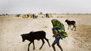 Bønder i det kriseramte Sahel er fanget i en ond spiral: På grund af blandt andet billigt mælkepulver fra EU kan de ikke sælge deres mælk, og derfor må de sælge deres kvæg, hvilket stiller dem endnu dårligere.