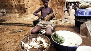 Ved at forbedre og vitaminberige tradtionelle afgrøder i u-landene, kan man målbart forbedre sunheden. En afikansk pige skræller den stivelsesholdige kassava/maniokrod, der bruges som mel og i grød i  fattige dele af verden.