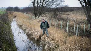 Forskere blev sat under pres, høringspraksis blev bøjet, EU-advarsler ikke taget til følge, miljøtiltag henvist til fremtiden – alt sammen for at sikre landmændene ret til at bruge mere kvælstofgødning fra næste måned