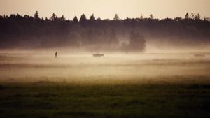 Białowieża, der står på UNESCO's verdensnaturarvsliste, er hjemsted for Europas største bisonpopulation, der ligesom ulv og los stadig kan strejfe frit i dens vildtvoksende indre.