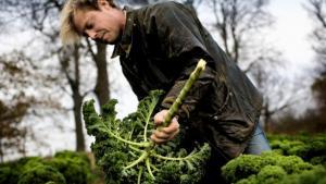I dag fremlægger Enhedslisten en række konkrete forslag til at bringe den grønne omstilling tættere på de socialt og økonomisk svageste grupper i samfundet