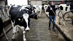 Som at tælle ned til juleaften. Sådan beskrev Landbrug & Fødevarers cheføkonom udsigten til, at mælkepriserne blev givet fri 1. april 2015. Men fjernelsen af kvoterne har været til alt andet end gavn for de mindre mælkeproducenter. Og det er et af eksemplerne på, at Landbrug & Fødevarer tænker mere på de store virksomheder end de små landmænd, mener kritikere.