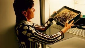 På universitet i Cape Town har Jill Farrant fyldt køleskabe op med genoplivningsplanter. De gemmer på formlen til evigt planteliv.