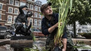 """Beplantningen afspringvandet Ålefangerenved Kystvejen i Aarhusvar en del af projektet""""Wild Aarhus"""", der skulleskabe bedre betingelser for den vilde natur i byen. Projektet var støttet af 'Puljen til Grønne Ildsjæle'under Miljøministeriet, somlukkede i 2015 - blot to år efter sin lancering."""