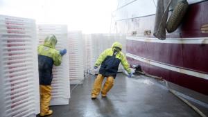 Danmark har fisket i engelsk farvand i tusindvis af år. Med Brexit kan milliardforretningen være slut