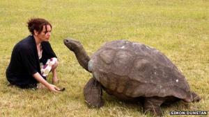 Synet er efterhånden røget, og lugtesansen er heller ikke, hvad den har været, men taget i betragtning at Jonathan er 182 år gammel, er det vel ikke så sært. BBC fortæller historien om kæmpeskildpadden fra St. Helenas forunderlige liv.