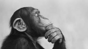 Forskning peger efterhånden på, at dyr har følelser, bevidsthed og til en hvis grad kultur. Er næste skridt dyrerettigheder?