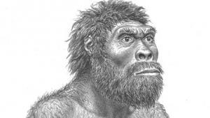 1.8 mio år gamle fossiler får forskere til at stille spørgsmålstegn ved den menneskelige evolution. Mange tidligere menneskearter kan i virkeligheden have været én art