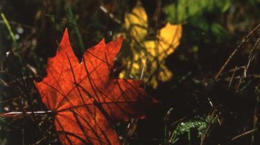 Efterår og vinter må, som de mørkets magter, de er, tæmmes med kultur.