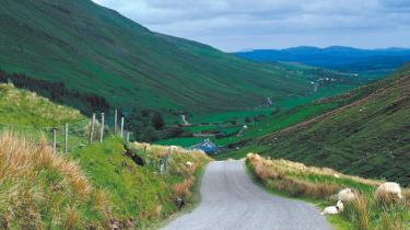 Selv langt ude på landet i Nordirland, helt ude hvor fårene har madpakker med, trives forskellen på katolikker og protestanter i bedste velgående