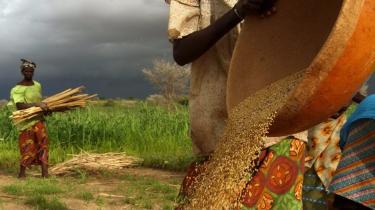 Netop hjemkommet fra Niger kan vi fortælle, at vi med egne øjne har set, at de æsler, danskerne har betalt, er en god idé