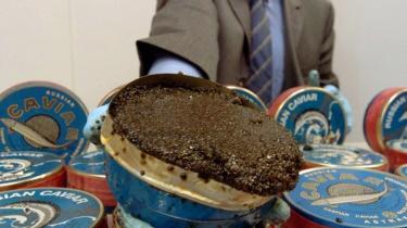 Kaviar er blevet en eftertragtet og hundedyr smuglervare. Her er det beslaglagt smugler-kaviar fra Tyskland, som skulle sælges for 300 euro (2250 kr.)pr. dåse med 500 gram.
