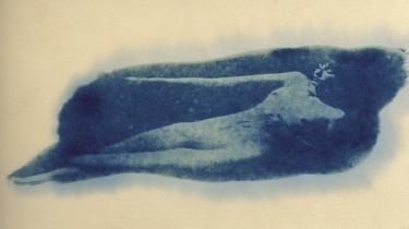Krop. Frigørelsen har sat skub i kravet om den perfekte krop. Den krop vi har er ikke længere nok.