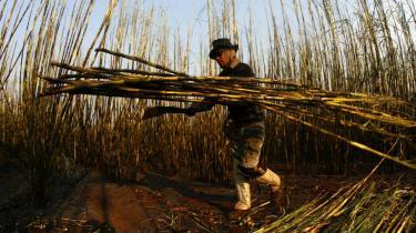 Brasiliansk bonde i færd med at høste sukkerrør. Bioethanol produceret på sukkerrør i Brasilien vil give en reduktion på 85-90 procent af energiforbruget og CO2-udslippet i forhold til benzin, hævder Statoil. Men det mener Noah er forkert.