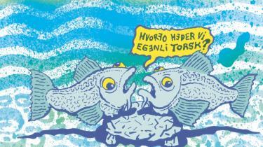 Fiskere og havbiologer skændes bravt om, hvor mange torsk der er i havene omkring os. Alligevel kan man godt få lyst til torsk en gang i mellem