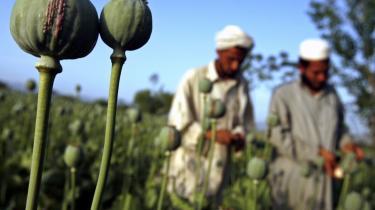Opium bliver høstet på farme i hele Afghanistan og ført til heroinfabrikker i de afsides beliggende Pamir-bjerge i Badakhshan-regionen, hvor den bliver omdannet til heroin. Herfra bliver den smugulet til Tadsjikistan og derfra til Europa.