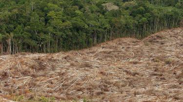 Rydningen af regnskoven i Amazonas accelererer voldsomt. Alene i april forsvandt 1.100 kvadratkilometer skov.