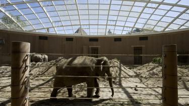 Zoo i København har fået en ny seværdighed med højt til loftet og plads til at vifte med ørene