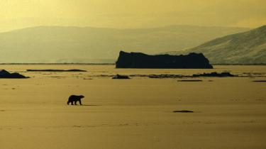 Billedet viser Dove bugt i det nordøstlige Grønland. Nye målinger viser, at smeltningen af den arktiske havis går hurtigere i år end nogen sinde tidligere og kommmer stadig nærmere det grønlandske fastland.