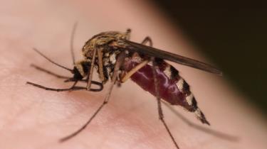 Malaria er en af de store globale dræbere med 2,7 millioner dødsofre om året. Malaria-parasitten er en lille encellet organisme (protozo), der lever som parasit i mennesker og én bestemt myggeart med navnet Anopheles.